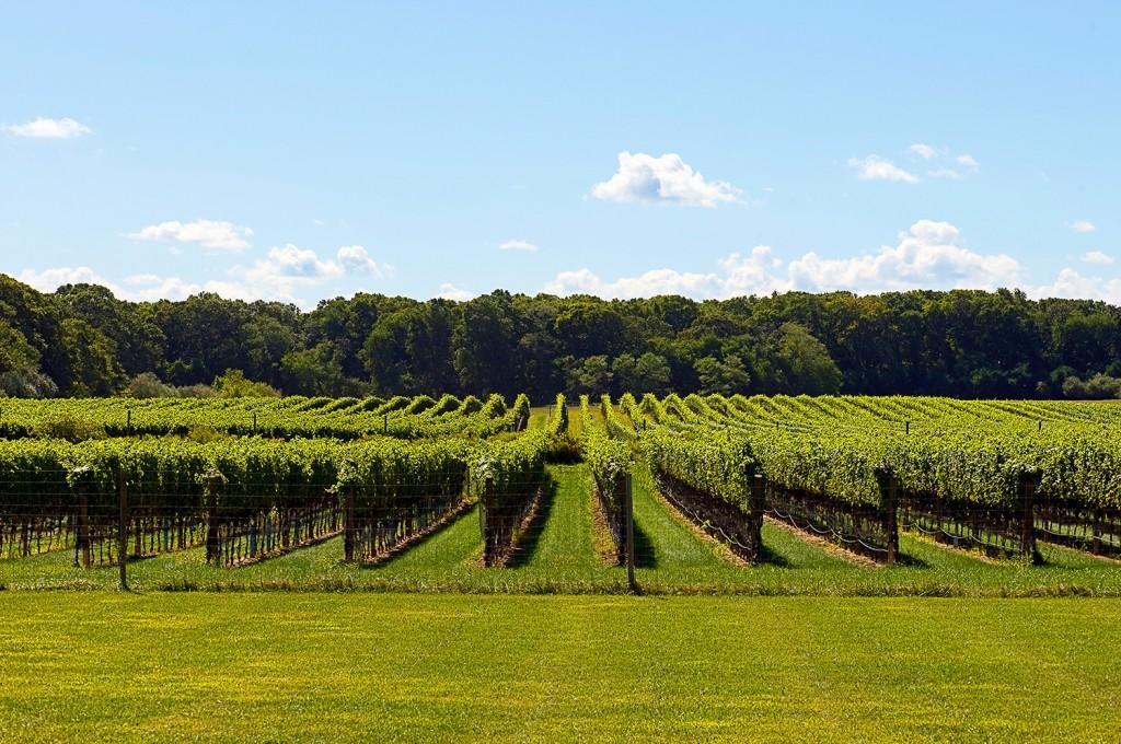 Hanptons Winery must see