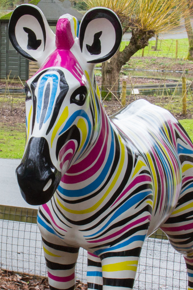 Gilbert the Zany Zebra at Marwell Zoo in Hampshire