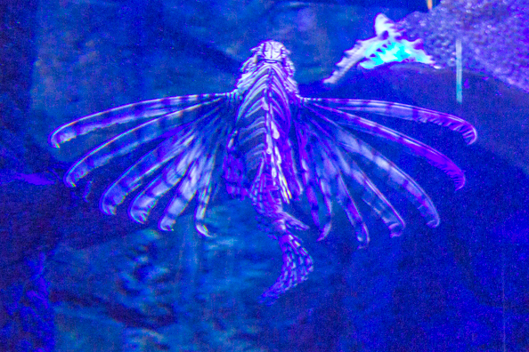 Sea Life in Weymouth on the Jurassic Coast in Dorset, UK